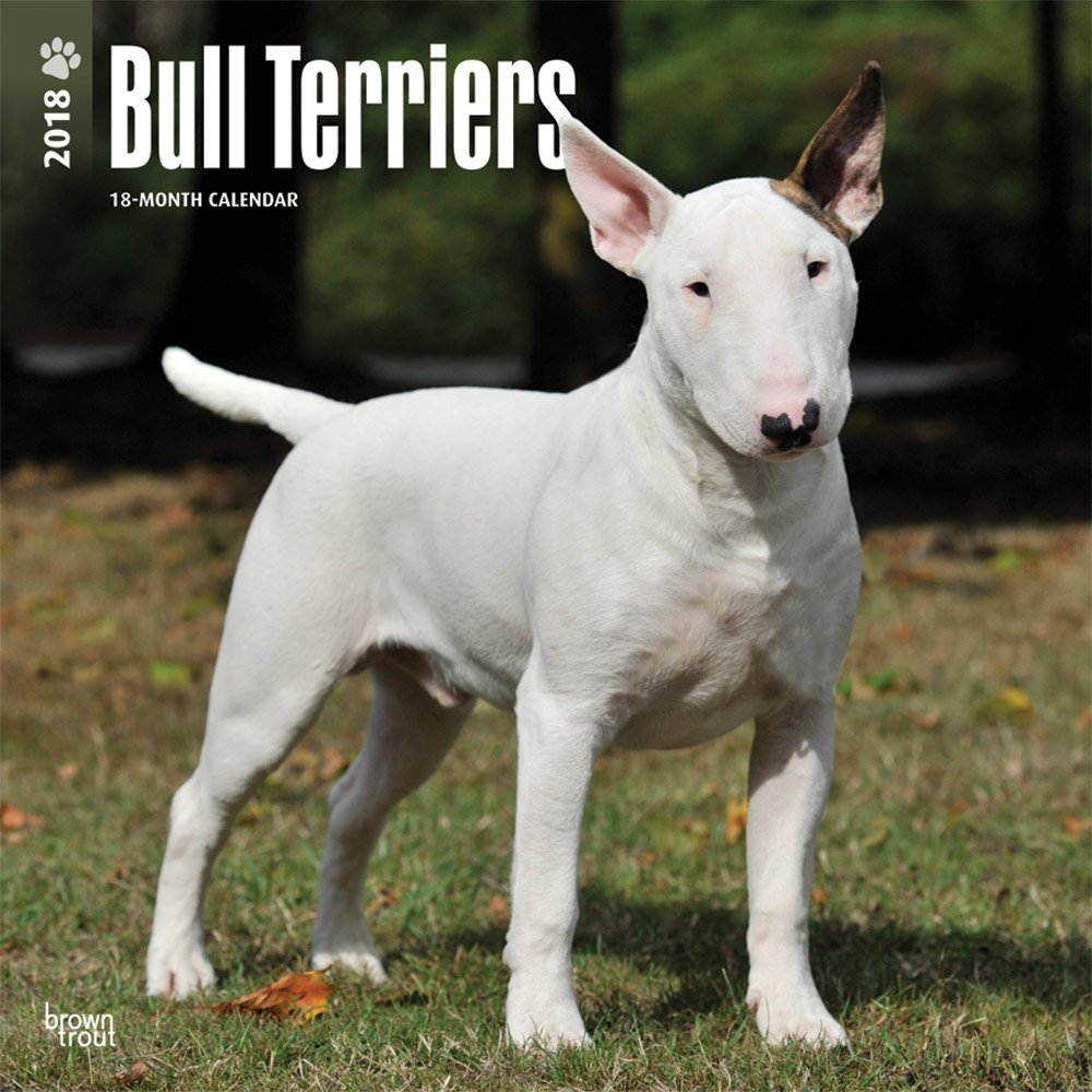 Download Bull Terriers 2018 12 x 12 Inch Monthly Square Wall Calendar, Animals Dog Breeds Terriers (Multilingual Edition) PDF