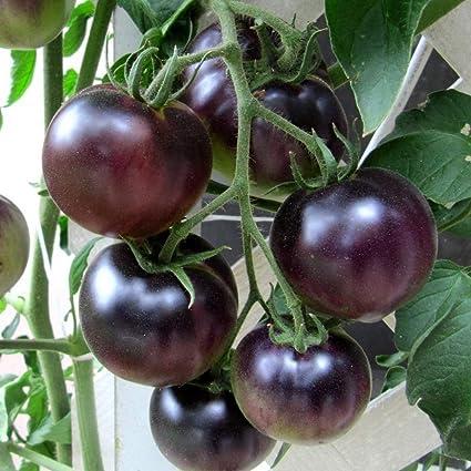 Pets Delite® OSU Blue Tomato- 5 Semillas - El 1er Tomate Azul del Mundo