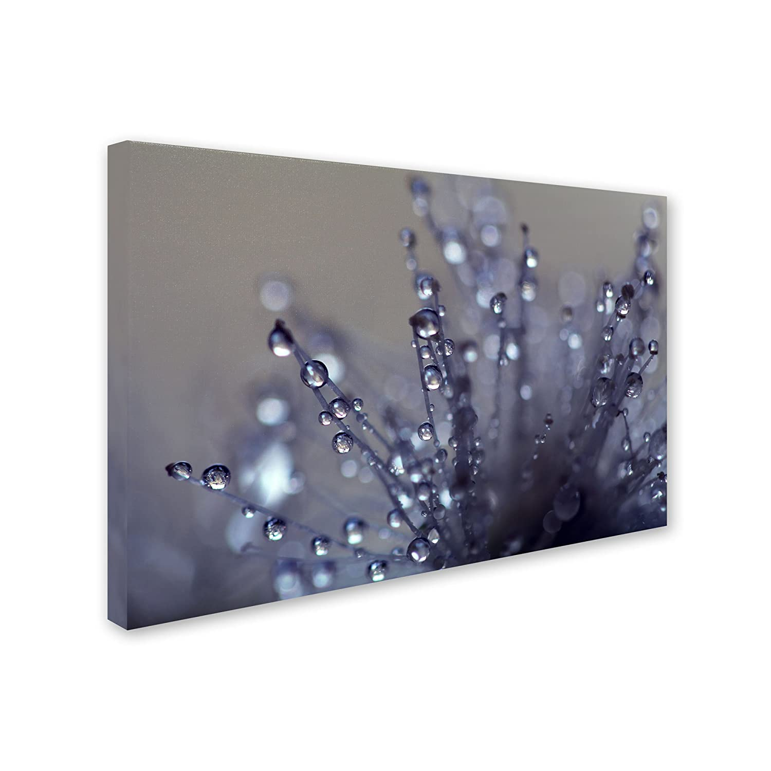 Evening Jewels Artwork by Beata Czyzowska Young, 22 by 32-Inch Canvas Wall Art