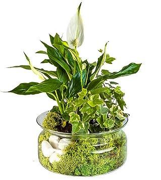 Glass Fruit Plant Orchid Terrarium Bowl 9 5 Cm High 25 Cm