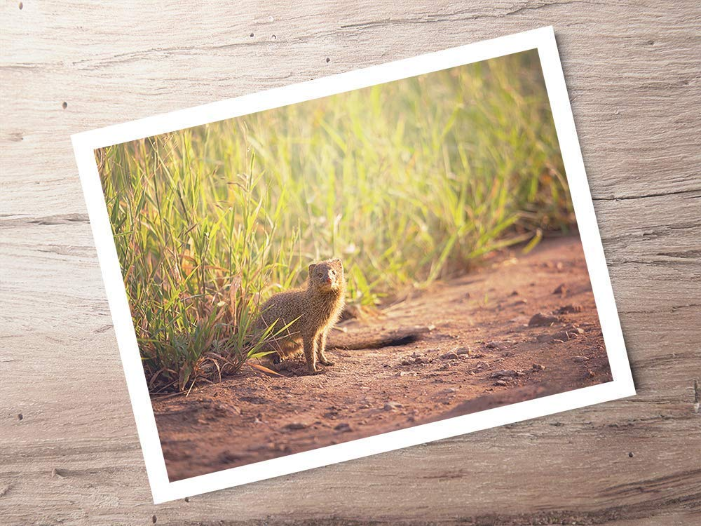 Mongoose - Wildlife Photograph Animal Picture Home Decor Wall Nature Print - Variety of Size Available by Whimsical Wild Artwork (Image #2)