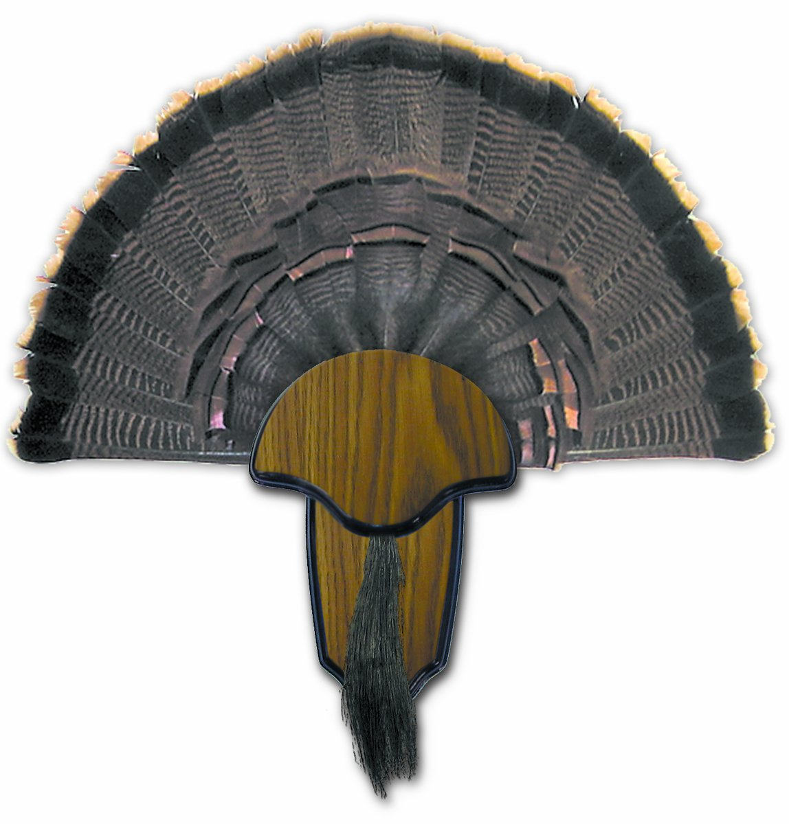 Amazon.com : Hunters Specialties H.S. Strut Turkey Tail & Beard ...