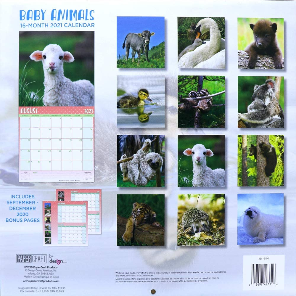 Baby Animals Full-Color Beautiful Scenic Photography for Office and Home Use OCD Bargain 2021 Wall Calendar 16-Month
