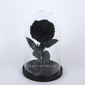 Beauty And The Beast C Est Une Rose Eternelle Noire Sous Cloche En