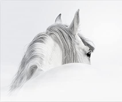 Studio 500 museum quality wall art 24x20 the mystical white horse in