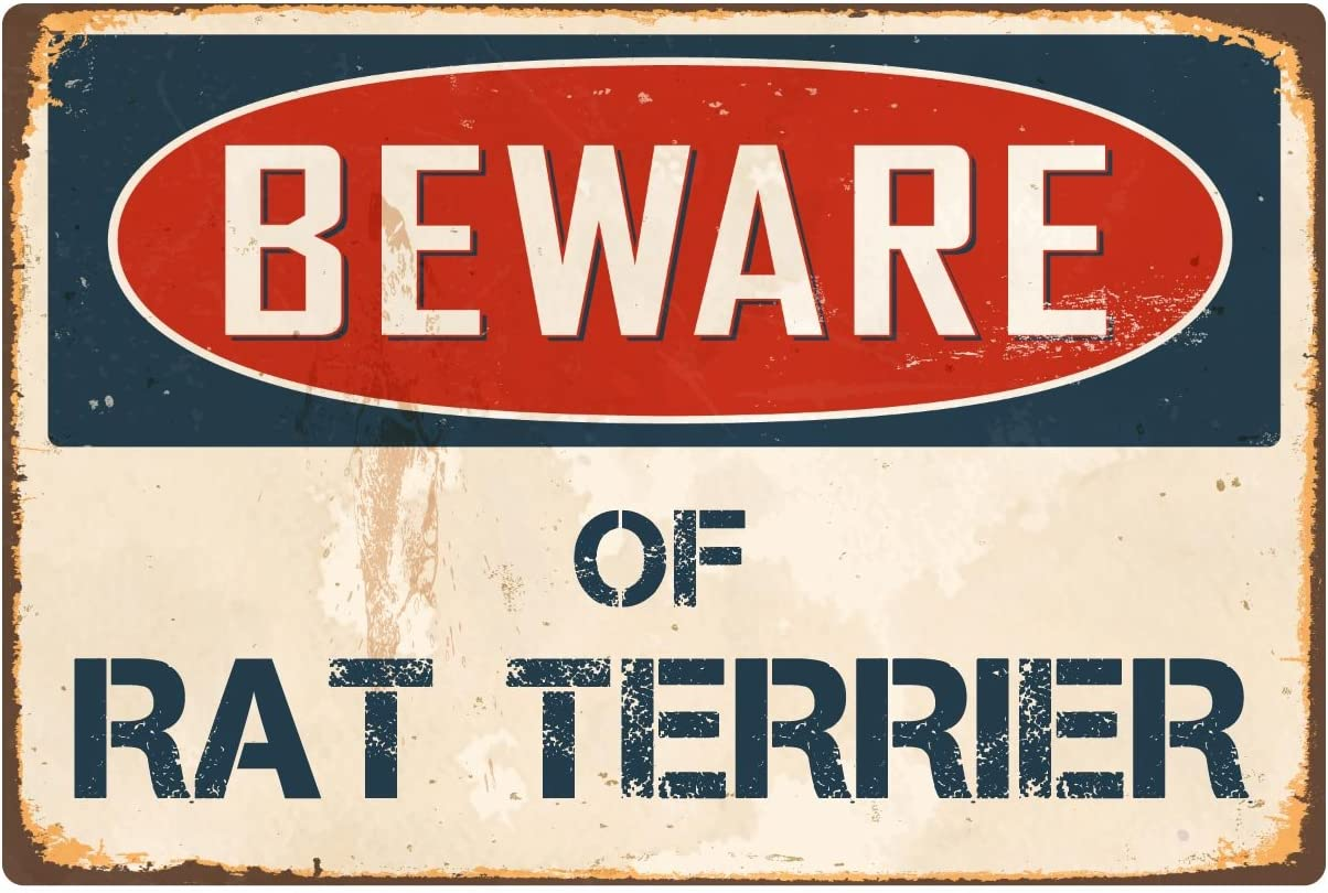 "StickerPirate Beware of Rat Terrier 8"" x 12"" Vintage Aluminum Retro Metal Sign VS357"