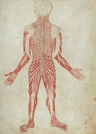 Amazon.de: Vintage Anatomie pseudo-galen, Englisch 15. Jahrhundert ...