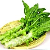 Chinese Celtuce Aparagus Stem Lettuce 200 Seeds Non-GMO Heirloom Vegetable