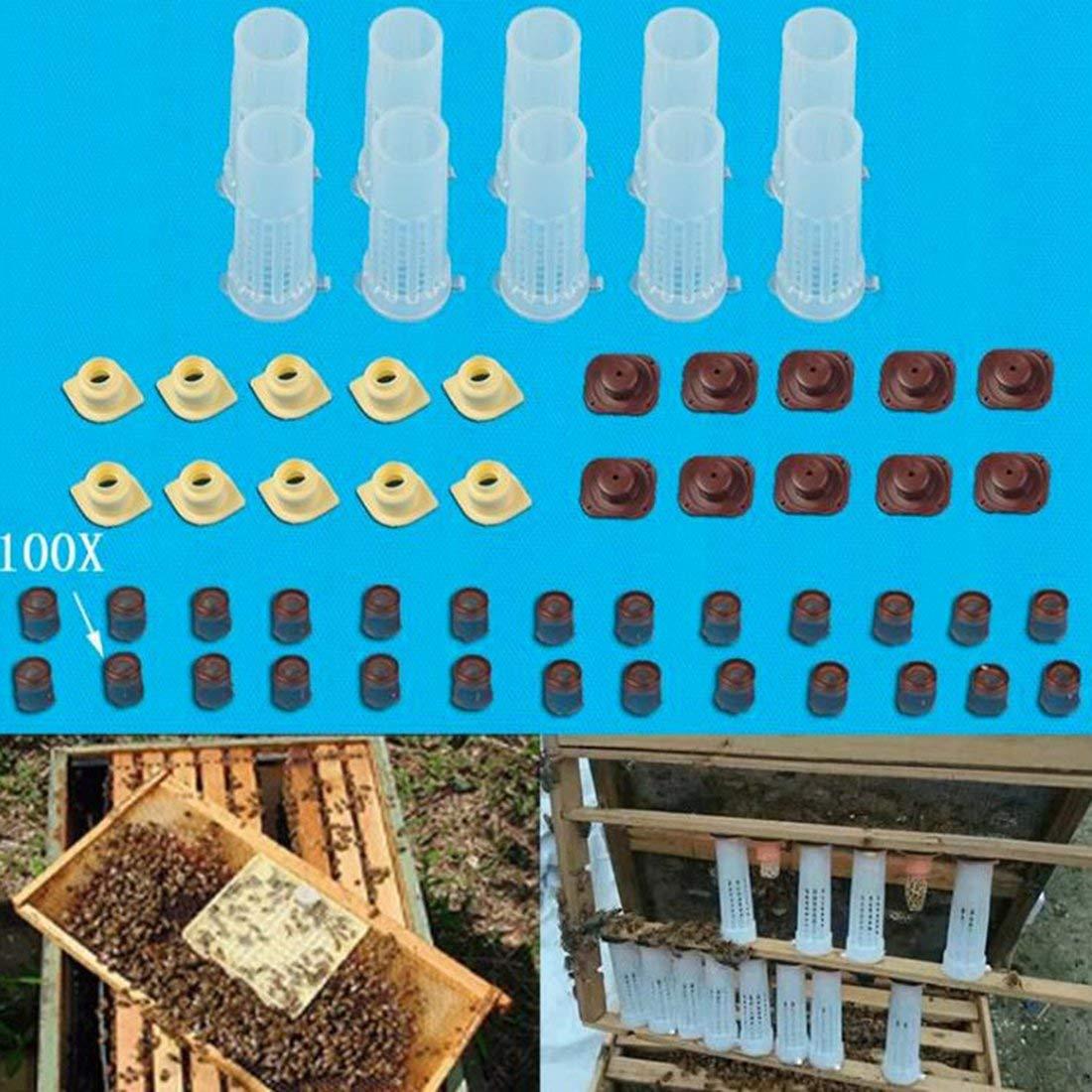 Bienenzuchtwerkzeuge Ausr/üstungsset K/önigin Aufzuchtsystem Kultivierungsbox Kunststoff Bienenzellbecher K/önigin Aufzucht Cupkit Box Mehrfarbig