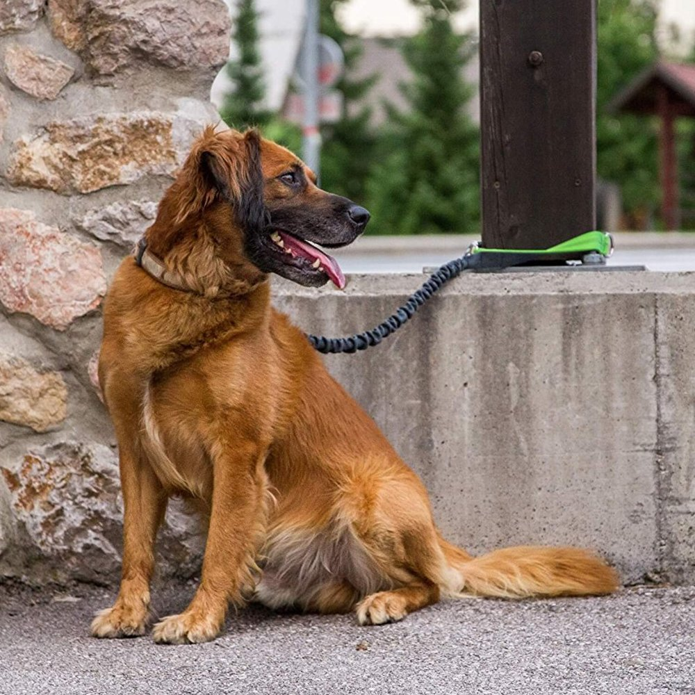 Hands Free Dog Leash-Strong,Durable & Safe with Adjustable Waist Belt and Reflective Stitching for Jogging,Hiking,Walking,Biking-for Medium and Large Dogs Anhao
