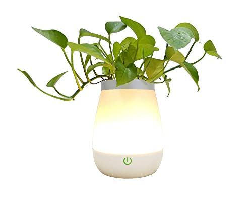 Dimmable Warm White Bedside USB LED Table Vase Lamp, 3 Modes, Rechargeable and Touch-Sensitive