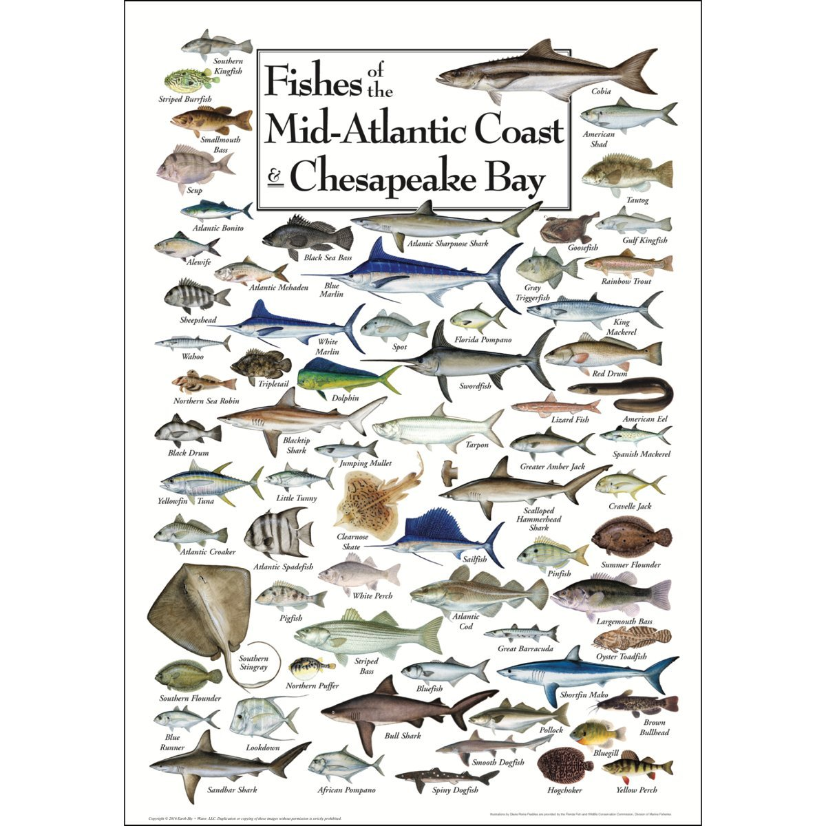 Amazon.de: Fische mit der midatlantic Coast und Chesapeake Bay ...