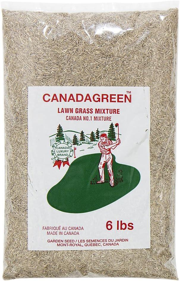 Amazon.com: 6 libras. Semillas de césped verde de Canadá ...