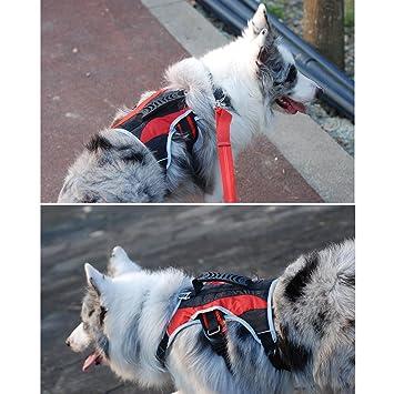 Treat Me arnés perro, perro arnés Nylon, pecho suave acolchado ...