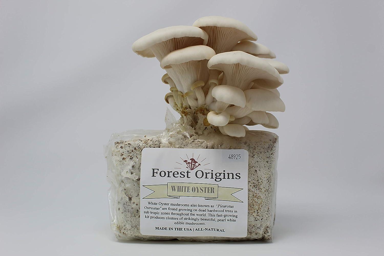 Amazon.com: White Oyster – Juego de cultivo de seta – todo ...