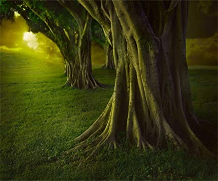 Amazon com : AOFOTO 12x10ft Magic Forest Background Dreamy