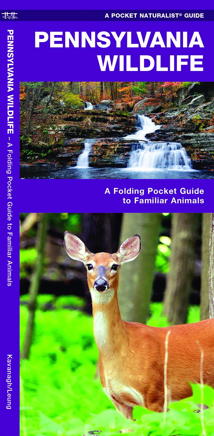 Pennsylvania Wildlife: A Folding Pocket Guide to Familiar Animals (Pocket  Naturalist Guides): James Kavanagh, Waterford Press, Raymond Leung:  9781583554838: ...