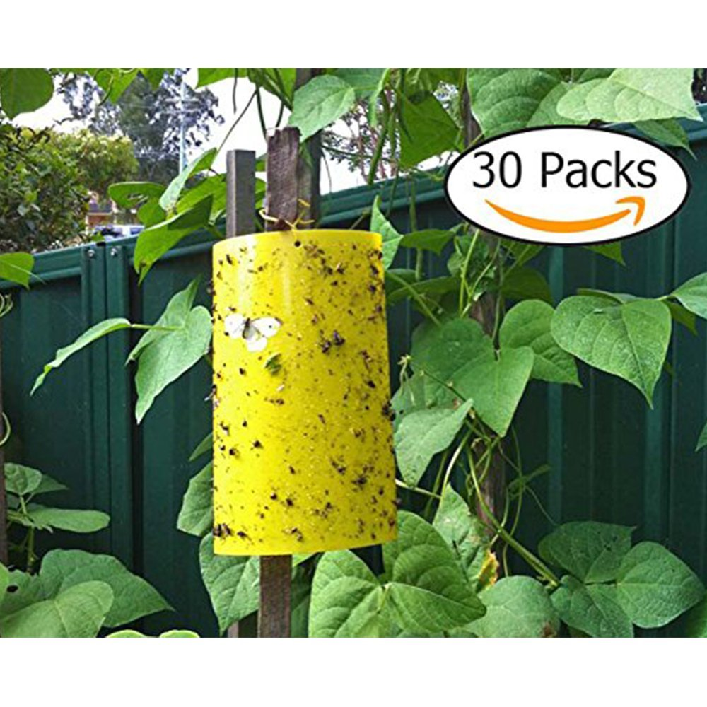 Dual-Sided Yellow Sticky Traps 8 X 6 Inch for Flying Plant Insect Like Fungus Gnats, Aphids, Whiteflies, Leafminers (30 PCS) by LLY