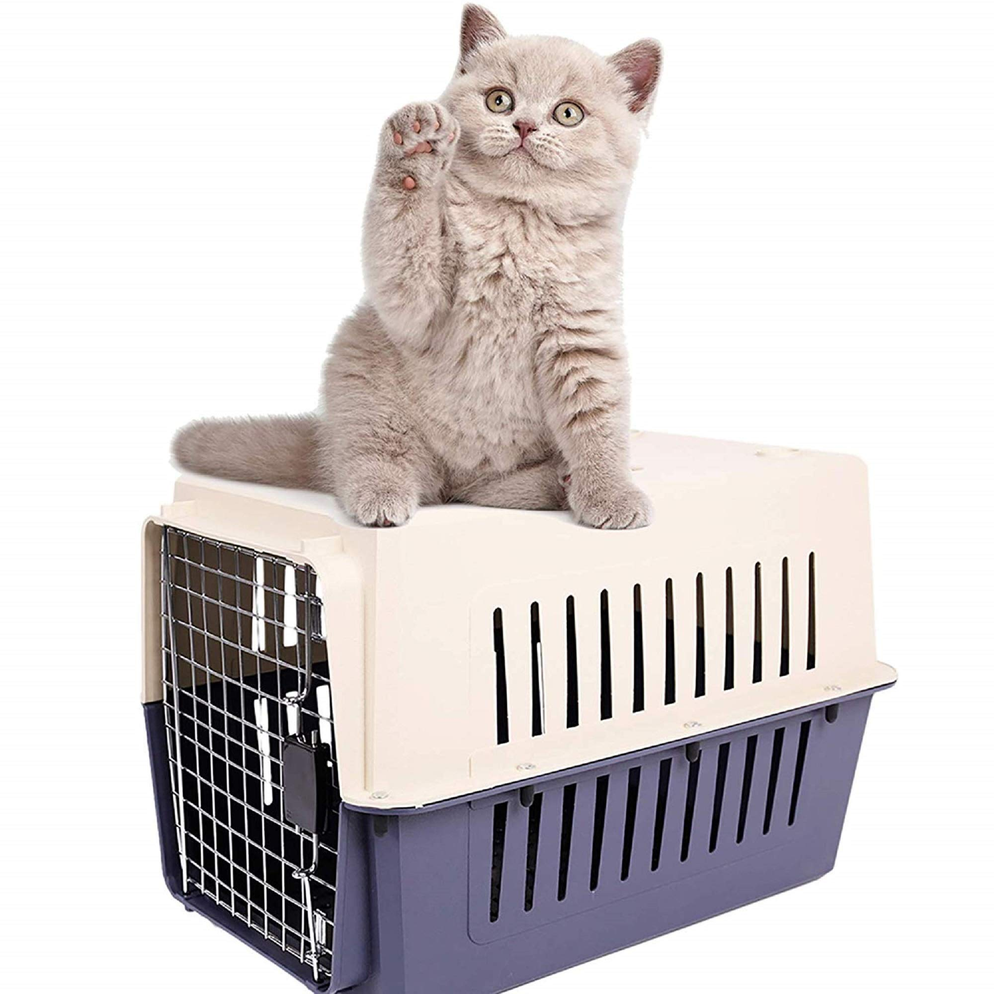 Livebest Portable Plastic Hard-Sided Pet Carrier Crate Outdoor Kennel Car Travel Box for Small Animals (M, darkblue) by Livebest