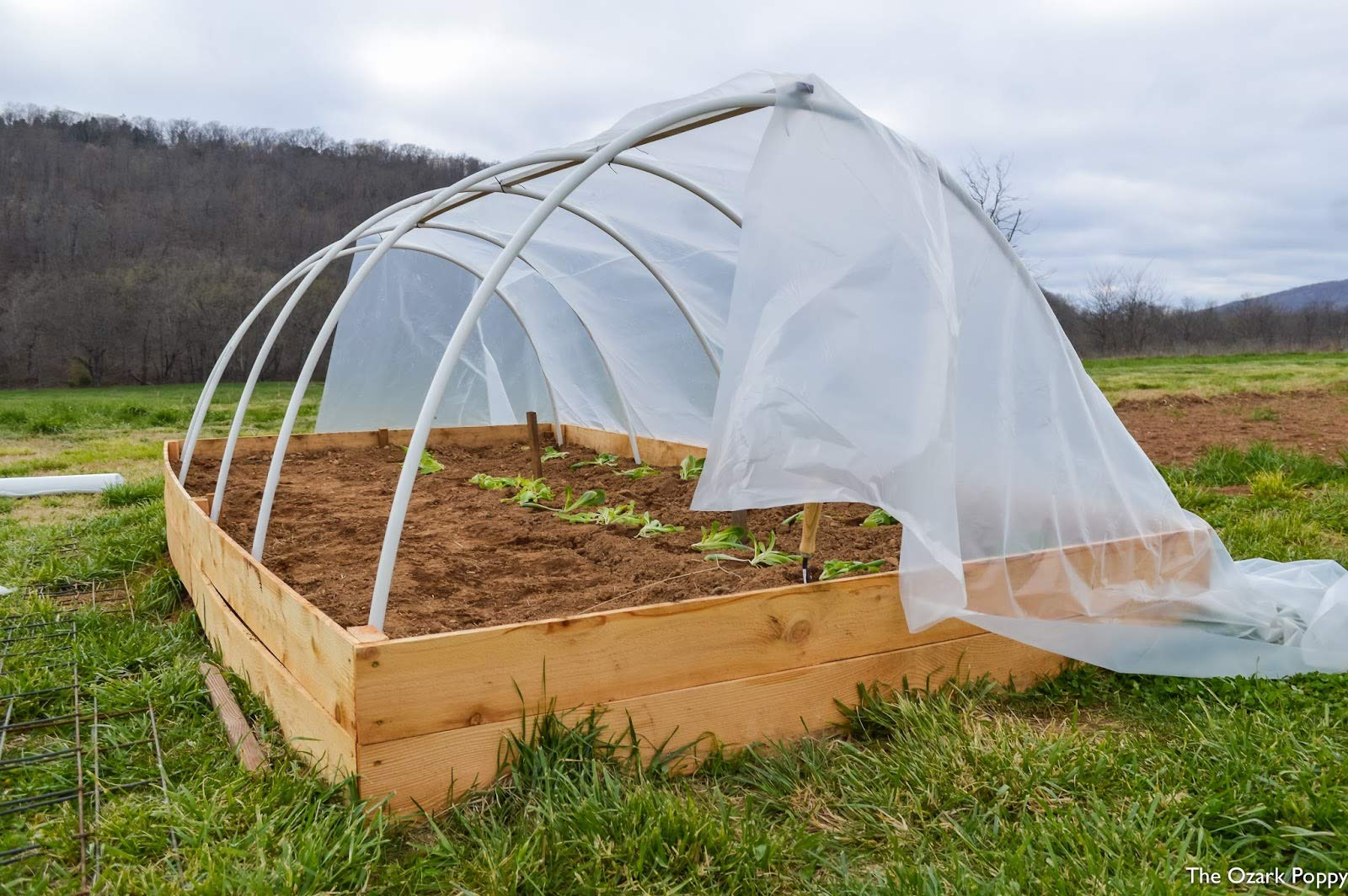 Ecover 5.5Mil Greenhouse Plastic Cover Polyethylene Clear Film for Garden Plant Cover, 12 x 50ft by Ecover (Image #5)