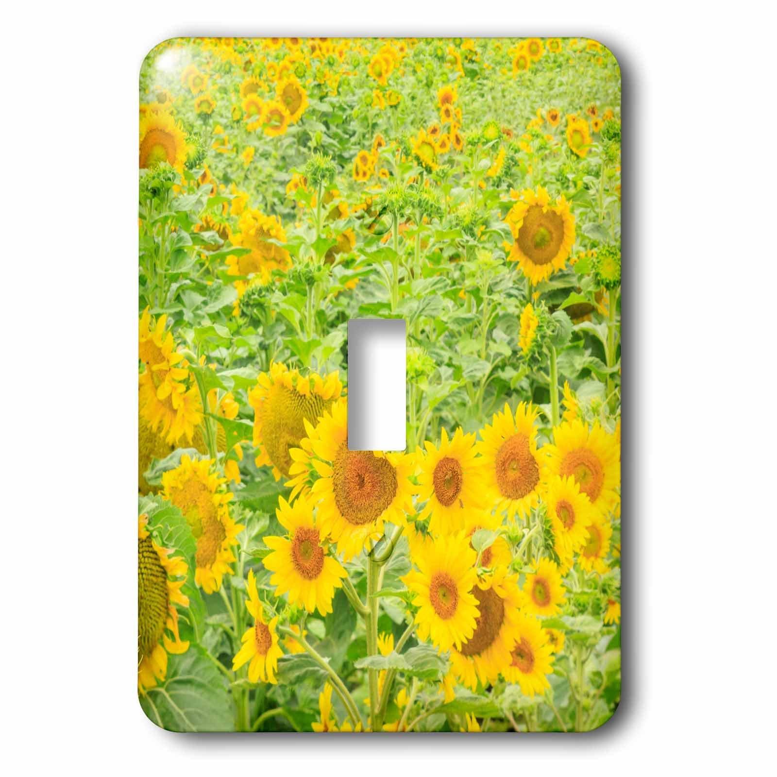 3dRose (lsp_231828_1) Single Toggle Switch (1) Large Field of Sunflowers, Washington State, USA