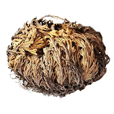 quan di 1 Pieces Resurrection Plant Hydrophile of Air Fern Spike Plants : Garden & Outdoor