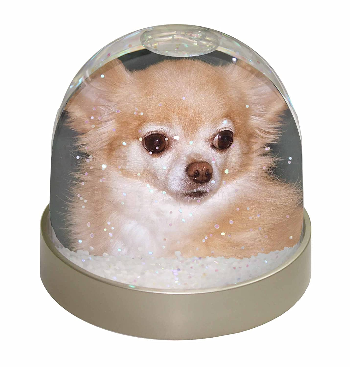 Advanta Chihuahua Dog Snow Dome Globe Waterball Gift, Multi-Colour, 9.2 x 9.2 x 8 cm Advanta Products AD-CH30GL