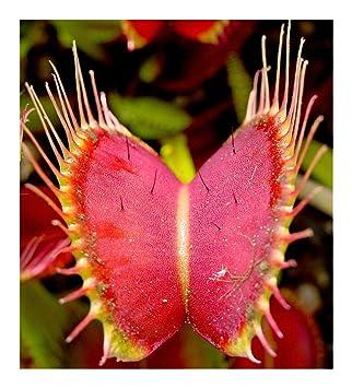 une  plante  - ajonc -  18 août bravo Martine 71A0ru9Hq7L._SY355_