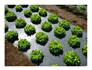 Grower's Solution Black Plastic Mulch