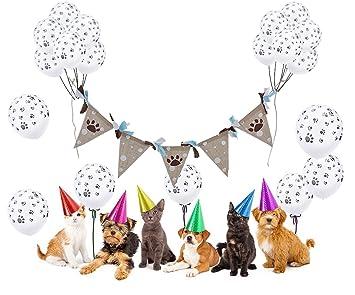 Geburtstag Hund