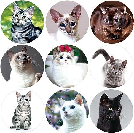 Realistic Cute Cat Stickers