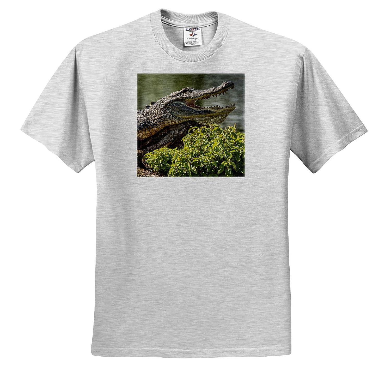 3dRose Danita Delimont USA Atchafalaya ts/_314833 Alligator Sunning on Log - Adult T-Shirt XL Alligators Louisiana