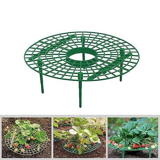 Soporte para plantas de fresa para proteger fresas y mantener la ...
