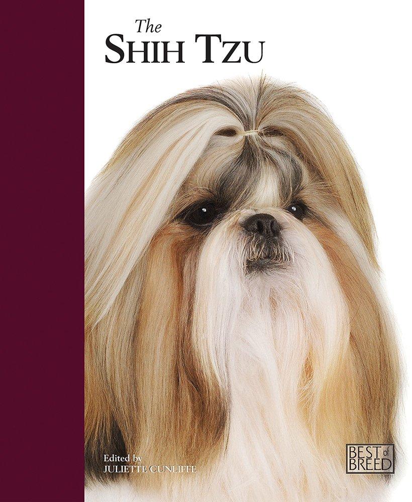 The-Shih-Tzu-Best-Of-Breed