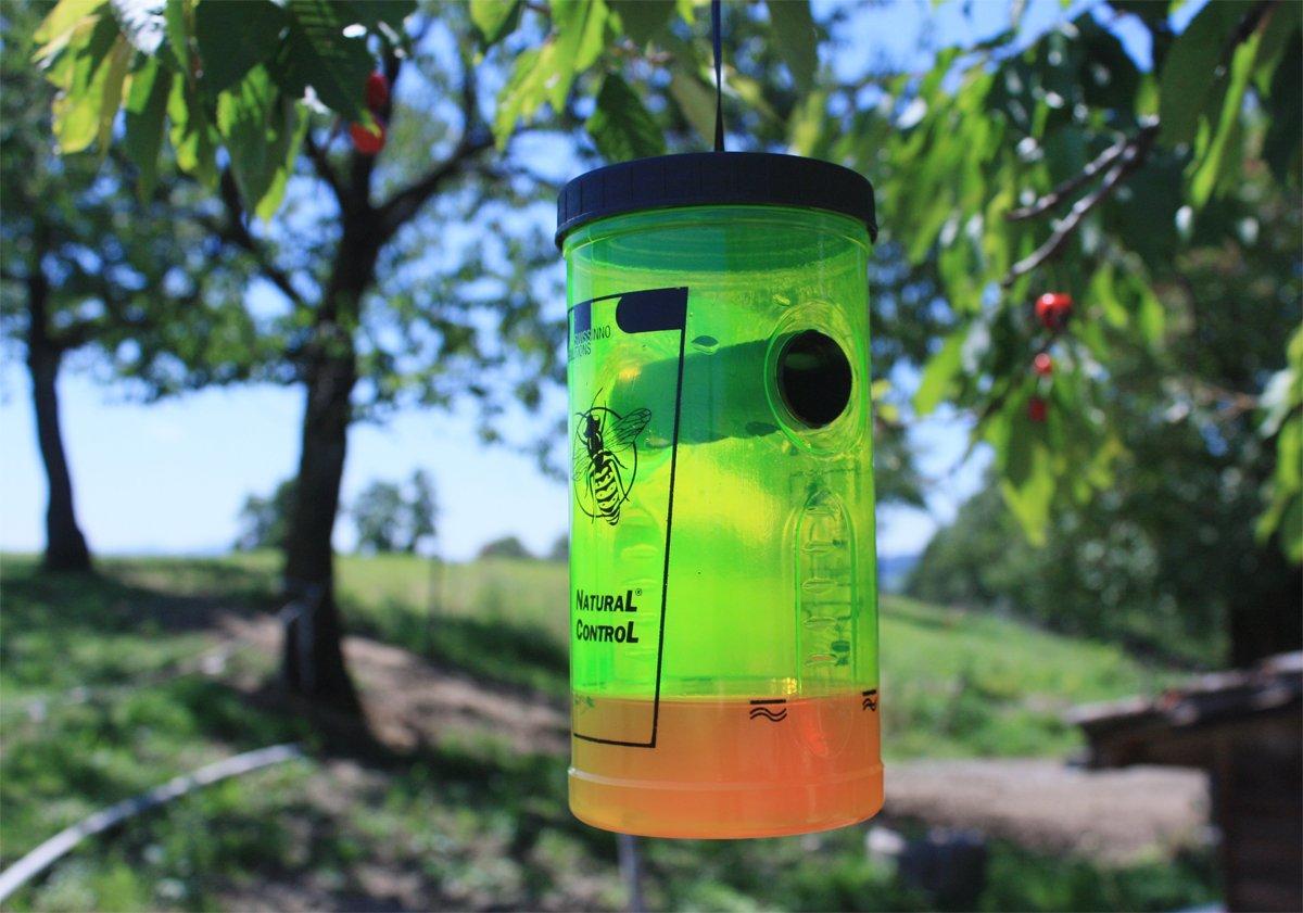 Swissinno 1 343 001W Natural Control - Trampa para avispas: Amazon.es: Jardín