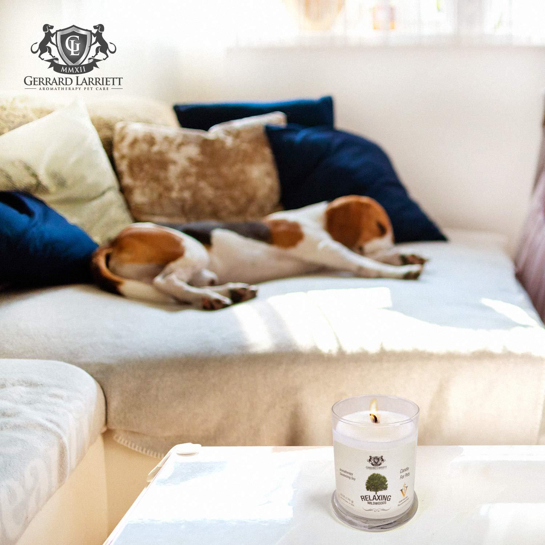 Jasmine Aromatherapy Deodorizing Soy Candle For Pets