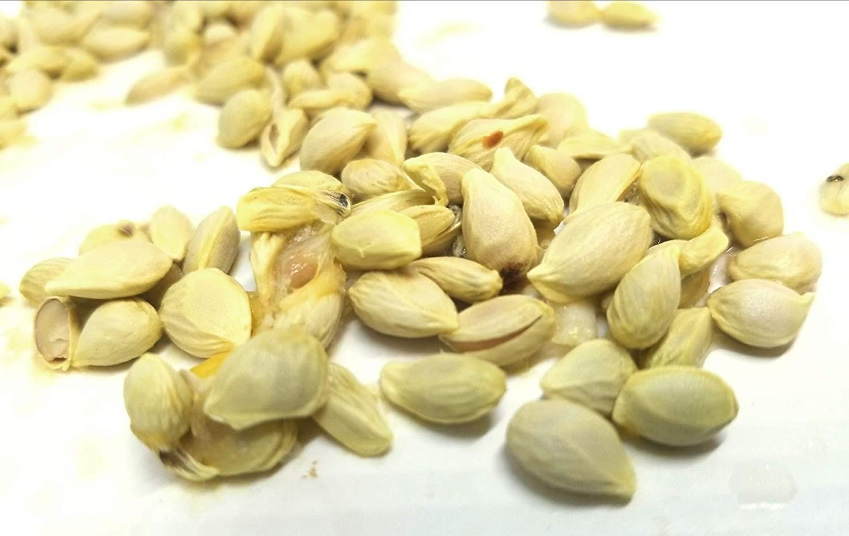 1180A Worlds Sweetest Kumquat* /'Meiwa/' *5 Seeds*Very Fragrant*EZGrow*Organic*1180A