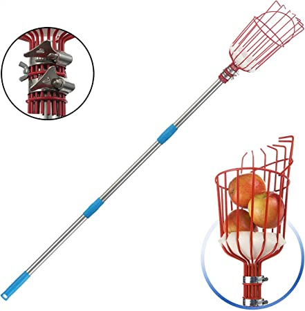 Fruit Picking Equipment for Getting Fruits Lemons Apples Guavas Avocados Pears Mangoes Oranges Citrus 8 Foot Fruit Picker Tool with Stainless Steel Connecting Pole Fruit Picker