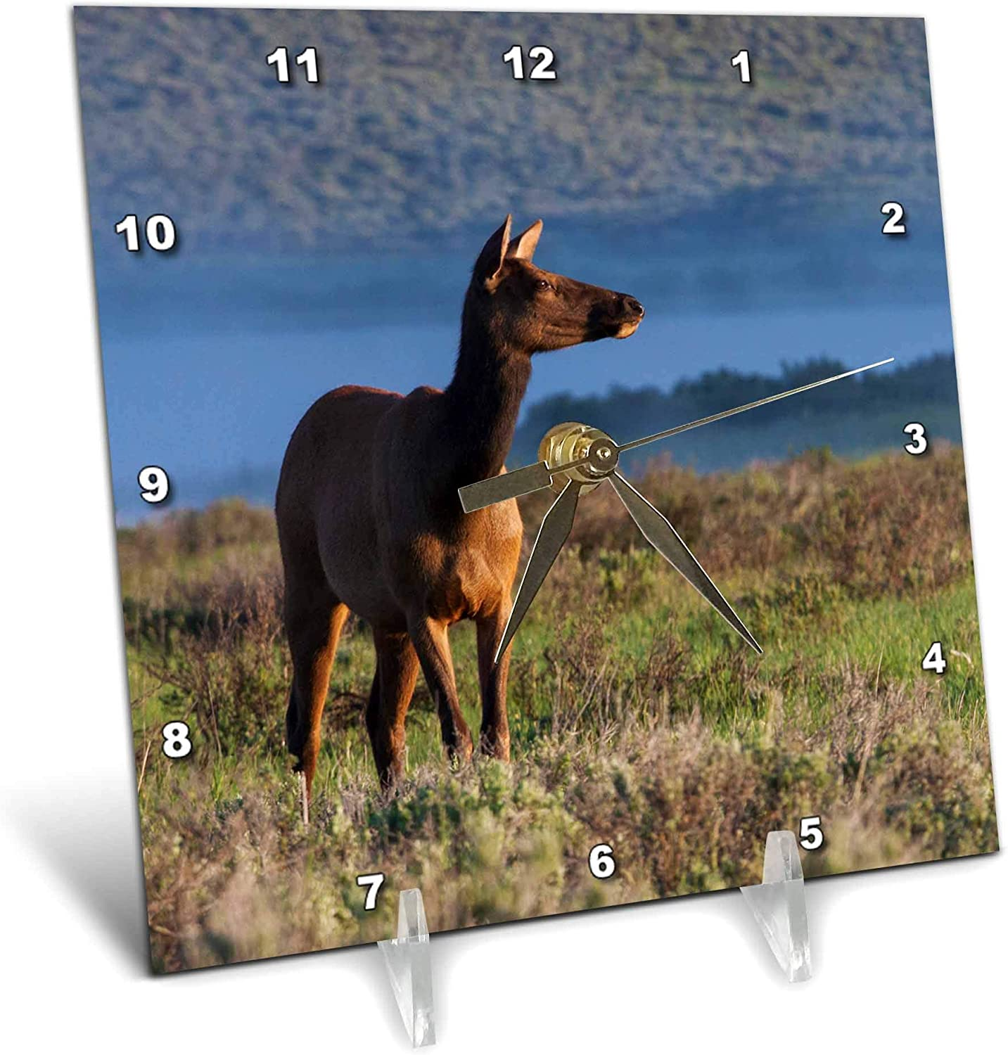 3dRose Danita Delimont - Animals - Rocky Mountain Cow Elk, Early Spring - Desk Clocks (dc_330588_1)
