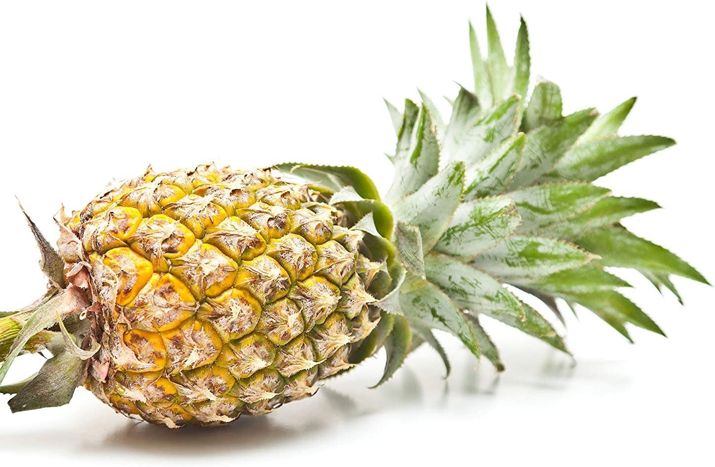 variety Cayene 2 Live Organic Plants Azorean Pineapple Ananas Comosus L.Merrill