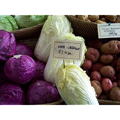 Cabbage, Chinese Michihili, Aka Napa Cabbage, 500 Seeds! Groco : Garden & Outdoor