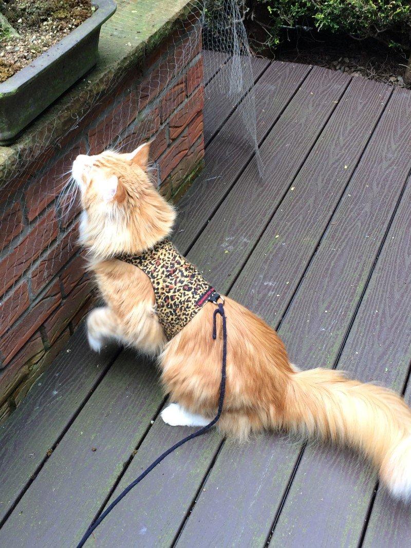 Mynwood Cat Jacket/Harness Cheetah Adult Cat