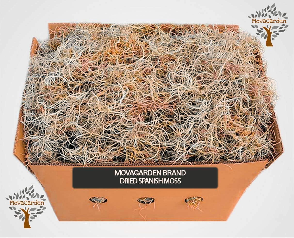4lbs Live Spanish Moss Live Spanish Moss Fresh or Dried Spanish Moss Product of USA