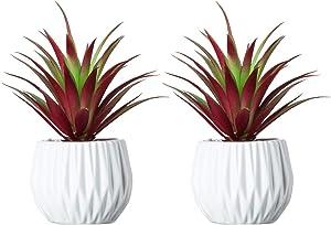 2Pcs Artificial Succulent Plants in Ceramic Pots - 7.5 in. Faux Succulent Greenery Cactus Cacti Bonsai Plant Sets Tabletop Shelf Decor