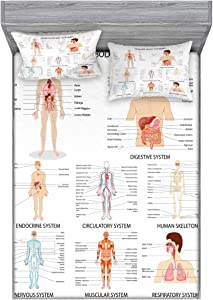 Ambesonne Human Anatomy Fitted Sheet & Pillow Sham Set, Complete Chart Different Organ Body Structures Cell Life Illustration, Decorative Printed 3 Piece Bedding Decor Set, Queen, White