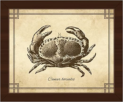 Amazon Com Vintage Crab Zoology Yellow Nautical Victorian Line Drawing Of Cancer Borealis Jonah Crab On Parchment Pattern For Beach House Wall Art Print On Canvas With Espresso Frame Posters Prints