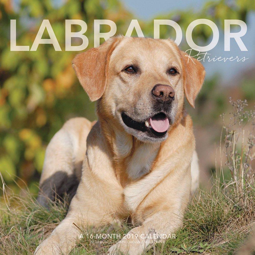 Download Labrador Retrievers Wall Calendar (2019) PDF