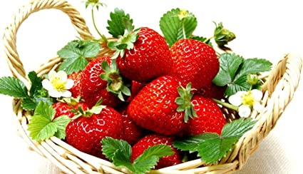 50 x  STRAWBERRY PLANTS Florence BARE ROOTED PRE ORDER