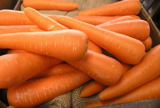 250 Organicos Chantenay Semillas De Zanahoria Color Rojo Oscuro Del Color Core Culinarias Amazon Es Jardin Después agregamos el liquido (caldo ó agua), sal y la zanahoria y mueve con cuidado para distribuir los ingredientes, vamos a cubrir con las ramas de. amazon es