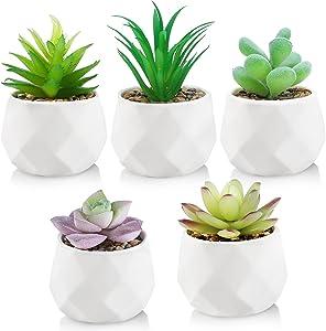 Zeemuuloo Faux Succulents Plants Artificial Set of 5, Mini Succulents Fake Plants in Ceramic Pots, Assorted Faux Succulents Desk Plants Decorations for Home Living Room Office Desk Decor